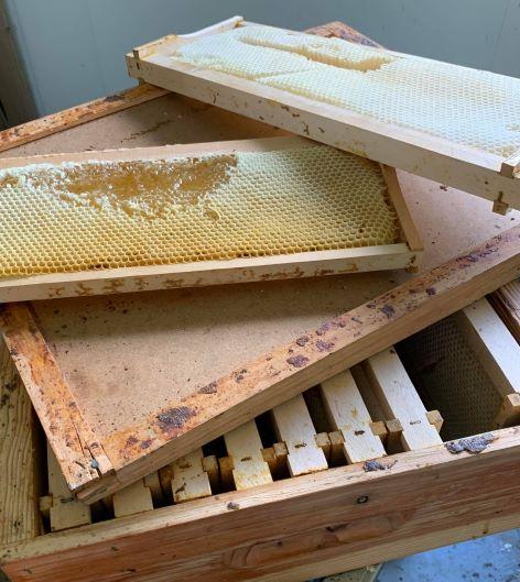 vente essaim reine miel