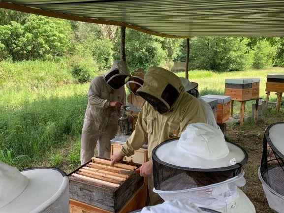 rucher de claron APIBOX cadre ruches