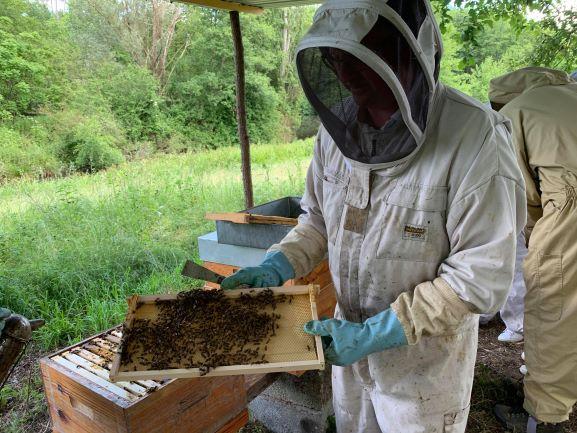 rucher de claron APIBOX immersion abeilles bougue