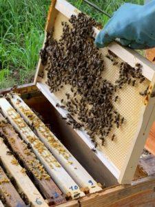 ruches miel rucher de claron bougue