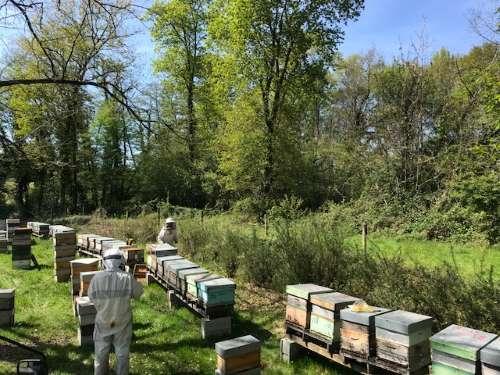travail ruche foret miel landes