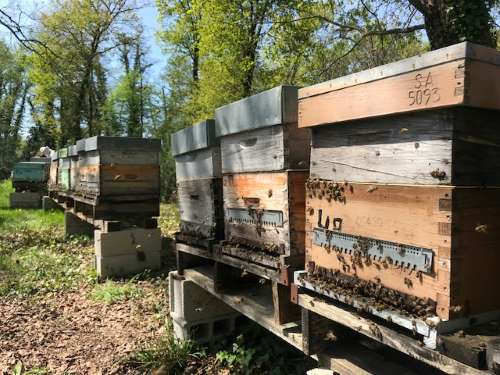 ruche pin miel landes abeilles